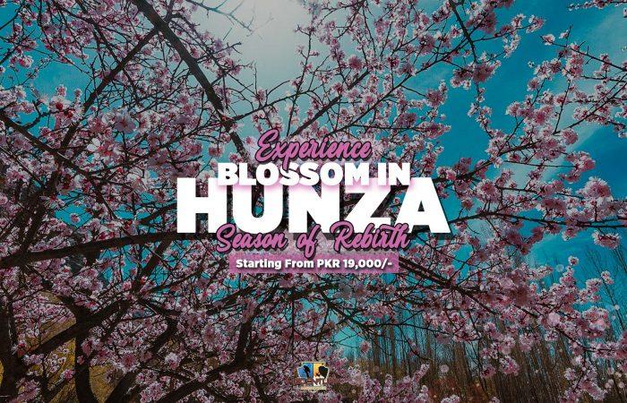 Hunza Valley Blossom